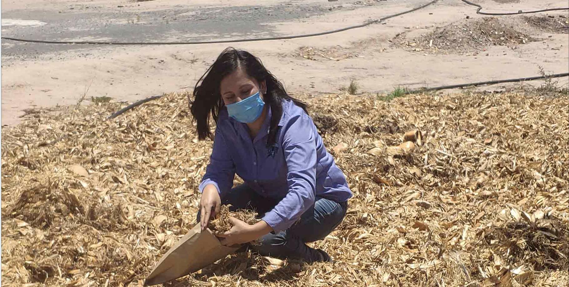 Proponen Proyecto para Aprovechar el Bagazo de Sotol como Opción Alimentaria para el Ganado